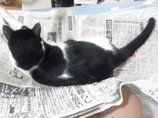 タッタ、今日も新聞を読む