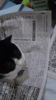 タッタの新聞チェック:のり弁