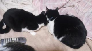 その後ろでこの二猫は・・・