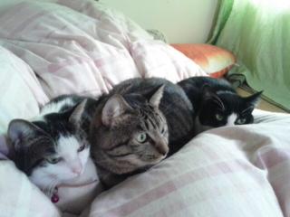 今朝の3猫
