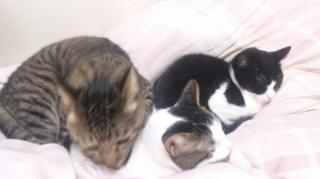 今夜の3猫