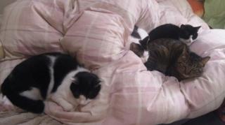 ちょっと珍しい4猫