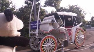 スタークルージングの馬車