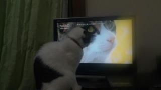 気になる猫番組