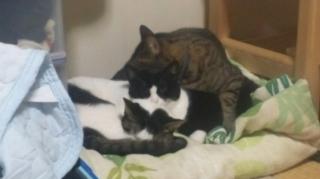 狭いところに3猫