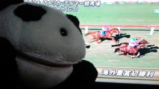 レコルトちゃん海外制覇