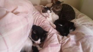 猫族、布団占拠