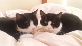 そして、二猫の世界