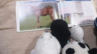 今年の馬を選ぶ