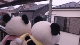 雪が降って来た!
