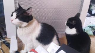 ちょっと違うご両猫