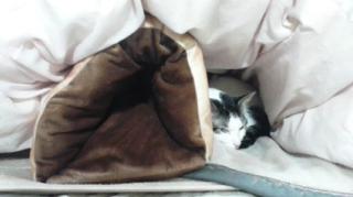 ネコロネいまだ利用猫ゼロ