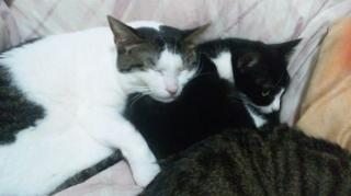 さくらの猫枕