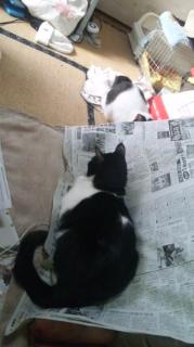 新聞争奪戦