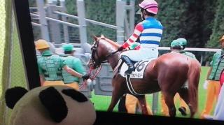 期待馬のデビュー戦