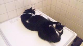 お風呂でWニャンモナイト