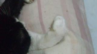 リラはんの爪