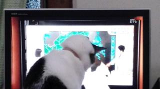 平井さんと猫と猫