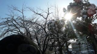 公園も雪景色