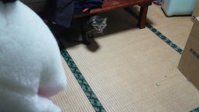 犯猫、だれ?