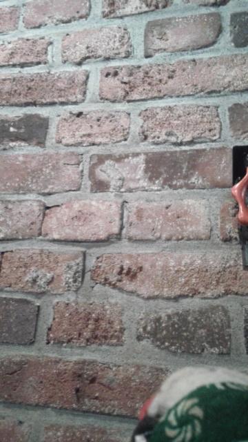 シシオの気になるレンガの壁
