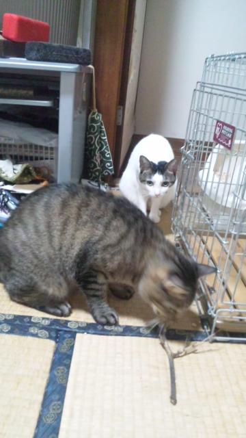 猫害始まる