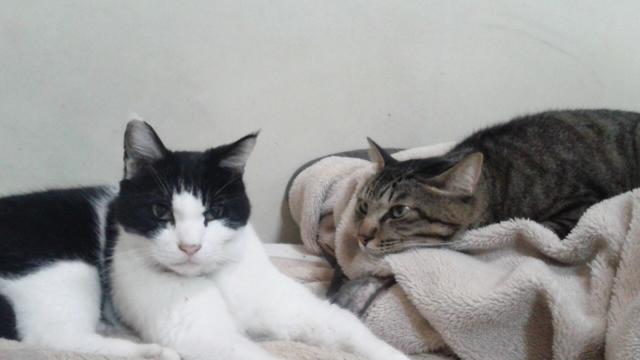 びみょ〜んな二猫