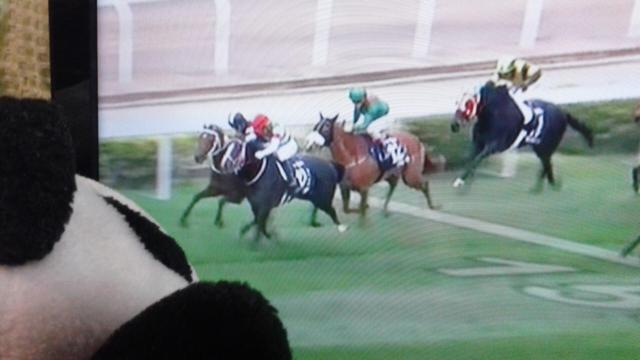 香港ヴァース、リスちゃん勝った!