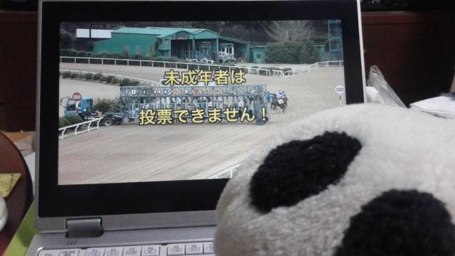 コタ、熊猫だも〜ん