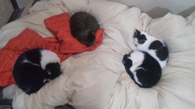 4猫に占領される