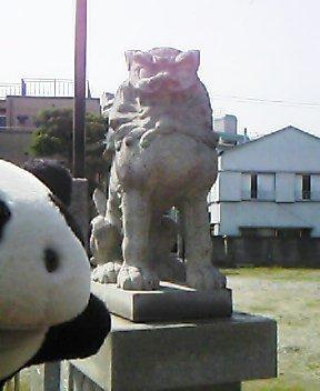 今戸神社の狛犬さんII