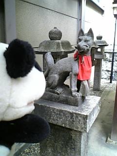 名古屋日記:朝日神社の狐さんI