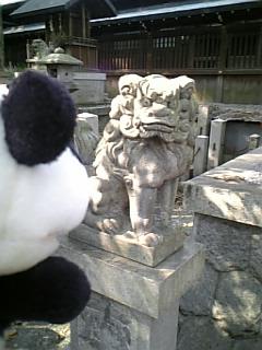名古屋日記:住吉神社の狛犬さん