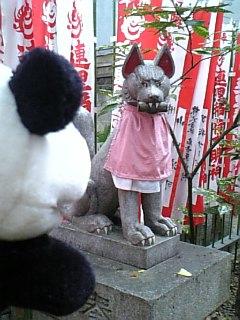 名古屋日記:連理稲荷の狐I