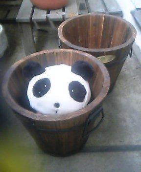 新しい植木鉢、6チャリンと60